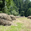Hay — Stock Photo #2465201