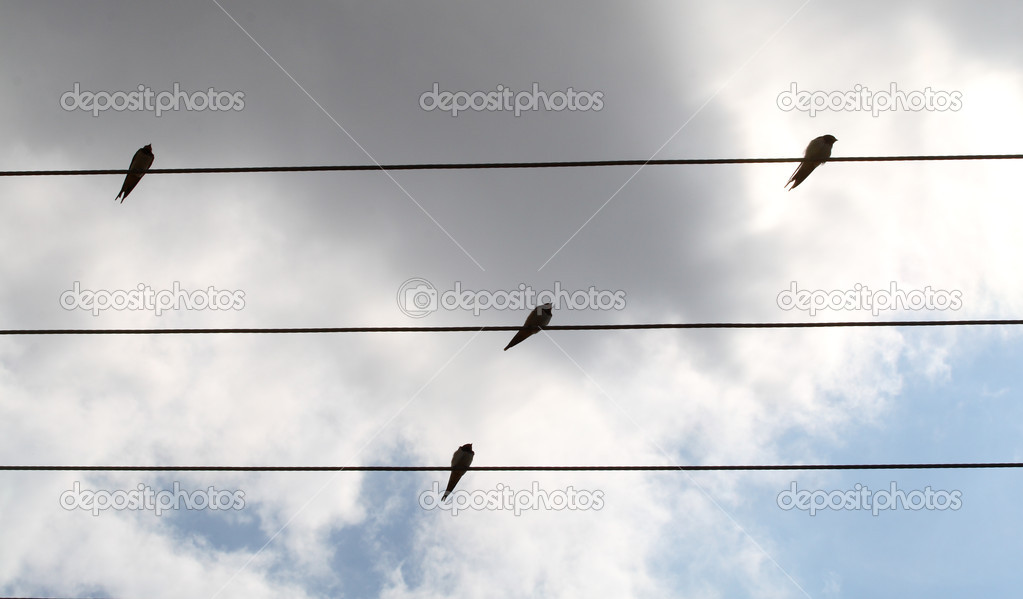 The birds sits on a wire   Stock Photo #2466000