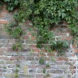 Wall with plants. - Stok fotoğraf
