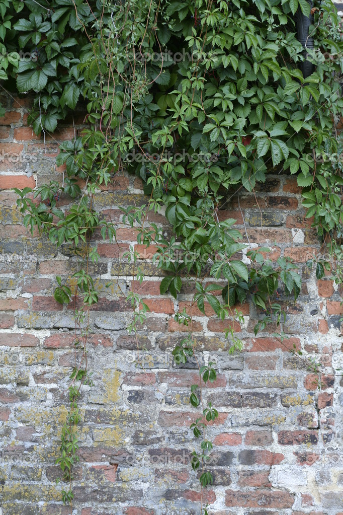 Brick wall with hanging plants as a background. — Stock Photo #2012815