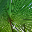 Awesome green palm leave — Stock Photo