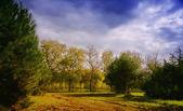 Bright sunshine in autumn field — Stock Photo