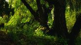 Morning forest in rising sun` light — Stock Photo