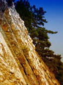 Marble rocks and pine trees — Stock Photo