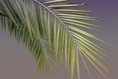 Attractive palm forest — Stock Photo