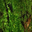 Moss in the forest - Stock Photo