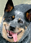 Hund — Stockfoto