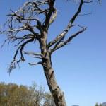 strom — Stock fotografie