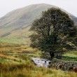 feld in schottland mit lone tree — Stockfoto #2062965