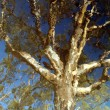 Gum tree — Stock Photo