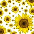 Sunflower background — Stock Photo #2225392