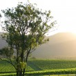 Hunter Valley - Stock Photo