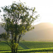 Hunter Valley — Stock Photo