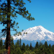 View of Mount Shasta — Stock Photo #1950385