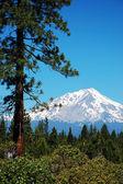 Widok szczytu mount Shasta — Zdjęcie stockowe
