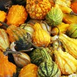 Colorful gourds — Stock Photo #2015392