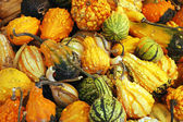 Colorful gourds — Stock Photo
