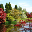 Stock Photo: Spring garden pond
