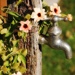Stock Photo: Faucet and flowers