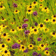 Stock Photo: Yellow echinaceflowers