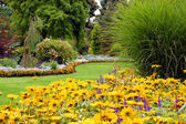 Summer garden in full bloom — Stock Photo