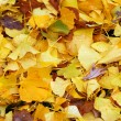 Royalty-Free Stock Photo: Wet autumn leaves