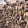 Logs — Stock Photo #2646849