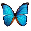 Butterfly isolated — Stock Photo