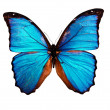 Foto Stock: Butterfly isolated