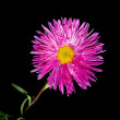 Stock Photo: Isolated pink flower