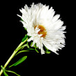 Stock Photo: White flower isolated