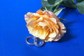 Wedding rose with rings — Stock Photo