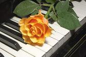 Piyano tuşu üzerine gül — Stok fotoğraf