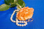 Wedding rose with pearl necklace — Stock Photo