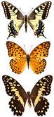 Некоторые различные бабочки, изолированные на whi — Стоковое фото