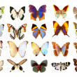 Some various butterflies isolated on whi - Stock Photo