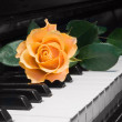Rose on piano key — Stock Photo