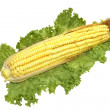 Yellow corn isolated with green leaf — Stock Photo