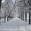 Park landscape in winter — Stockfoto #2066002
