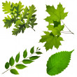 Stock Photo: Collection of leafs isolated