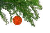 Christmas fur- tree with ball — Stock Photo