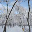 Park  landscape in winter - Stock Photo