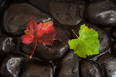 Two Vine Leaves on Dark Stones — Stock Photo
