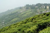 Town and Tea Garden — Stock Photo