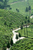 Path amidst Tea Garden — Stock Photo