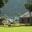 Village on lap of Mountain — 图库照片