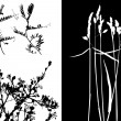 Collection for designers, plant vector — 图库矢量图片