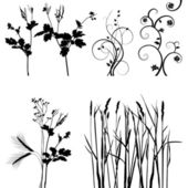 Collection for designers, plant vector — Vettoriale Stock