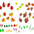 Leaf, collection for designers - Stock Vector