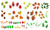 Leaf, collection for designers — Stock Vector